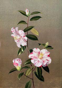 Paul+Jones+1921-1997+-+Australian+painter+-+Tutt'Art@+(14)