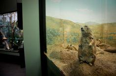 Le photographe Gaston Lacombe immortalise la tristesse des animaux dans un Zoo