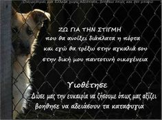 Greek Quotes, Dog Lovers, Funny, Animals, Pets, Frases, Greek, Animales, Animaux