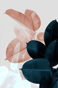 Tropical leaves in muted green and nude to inspire a cold collage of a typically warm foliage.
