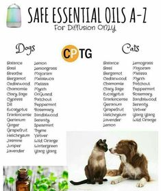 Pet essential oils.