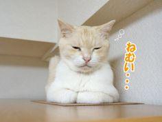 雨の日の猫は眠いから・・・|うにオフィシャルブログ「うにの秘密基地」Powered by Ameba
