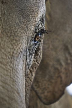Such beautiful, soulful animals! Let's care for and protect them like the deserve. Eye See You | Flickr - Photo Sharing!
