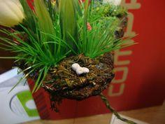 Undergrowth, nest