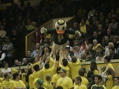 The Oregon Duck leaping into the Pit Crew at McArthur Court in 2009.