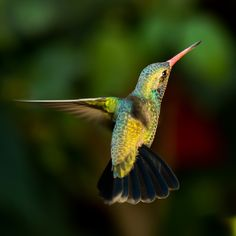 """Hummingbird"" by GonzaloHerreraPhotography | Colorful Birds #Photography Contest Winners - ViewBug.com"