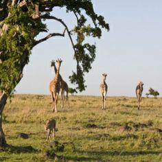 Top 10 South African Safari Destinations