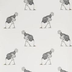 ostrich | Beware the