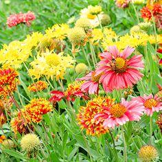 Garden Ideas & Projects - The Home Depot Perennials Fabric, Full Sun Perennials, Best Perennials, Hardy Perennials, Shade Flowers, Dried Flowers, Summer Garden, Water Garden, Garden Bulbs