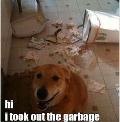 Funny Animal Pictures Of The Day - 23 Pics #humor #funny #meme #picture