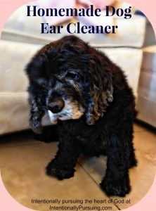 Homemade Dog Ear Cleaner - Intentionally Pursuing