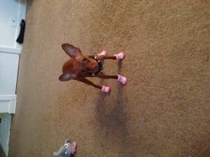 Booties and charmed Collar! :)