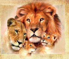 Lion Family - Stretched Canvas