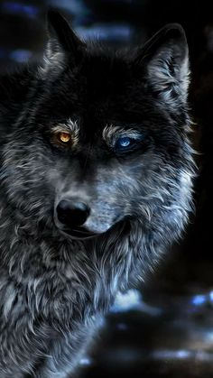 Wolf Heterochromia Fantasy In Resolution Big Wolf, Wolf Love, Wolf Photos, Wolf Pictures, Beautiful Wolves, Animals Beautiful, Wolf Warriors, Alpha Wolf, Wolf Artwork