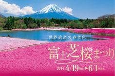 (圖) 富士山芝櫻季 夢幻開催!看介紹》》◎MOOK景點家 華文最大...
