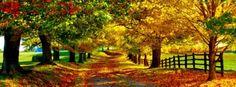 Autumn Road Facebook Covers