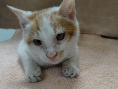 Kitten travels 6,500 miles from Shanghai – without anyone knowing