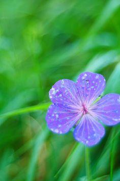 bokeh_flower-bokehova-kvetinka