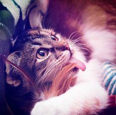 """""""Mowww"""" #cat #photocat"""