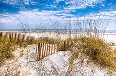 Florida Photo Metal Prints - The Dunes Metal Print by Debra and Dave Vanderlaan