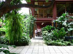 Costus, Chamaedorea seifrizii, Arenga Hookeri, Anthurium, ferns, Lotus and Carludovica palmata. Jim Thompson House, Thailand.