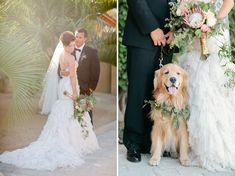 The sweetest golden retriever ring bearer!