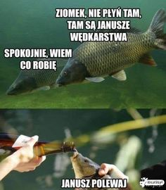 W poczekalni - Kozacko.pl Hilarious, Funny, Best Memes, Lol, Fish, Humor, Wooden Toys, Pictures, Animals