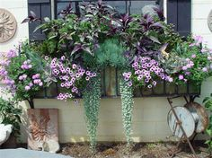 Window box with green and purple flowers. Perfect for all of the windows on our front porch. Window Box Flowers, Window Boxes, Flower Boxes, Flower Ideas, Container Flowers, Container Plants, Container Gardening, Beautiful Gardens, Beautiful Flowers