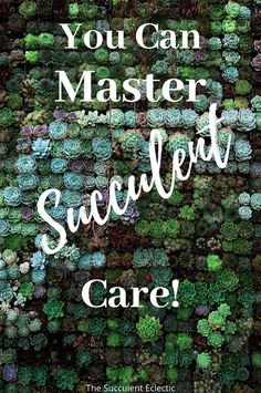Discover detailed articles all about succulent care, from the basics,like how to water succulents to in-depth information like why succulents change color. Learn what causes succulents to stretch and how to fix it. You'll find accessible articles with great explanations and helpful picture explaining aerial roots, how to protect succulents from pests, how to fertilize and more! #succulentcare #succulentcareinstructions #succulentcareguide