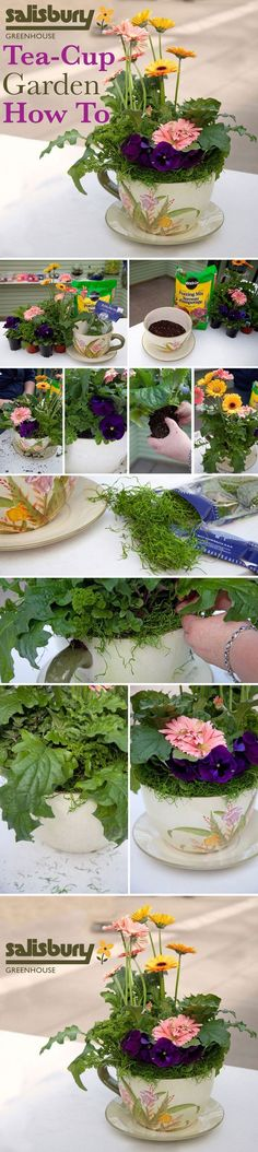 Teacup Mini Gardens Ideas to create your own Mini Fairy Terrarium Gardens with these miniature terrarium gardens, small water gardens, or combine the both. Backyard Garden Design, Garden Art, Garden Oasis, Balcony Garden, Tropical Flowers, Diy Plante, Small Water Gardens, Fairy Terrarium, Teacup Crafts