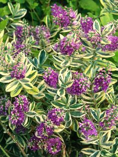 With their decorative foliage, sculptural form and seasonal blooms, shrubs make beautiful additions to container gardens. These 10 plants will be happy in a pot for a few years if you replace the top layer of soil and feed them each spring. Hardscape, Plants, Garden, Container Plants, Garden Shrubs, Urban Garden, Evergreen Plants, Perennials, Shrubs