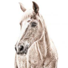 Magneetbehang paard - Groovy Magnets