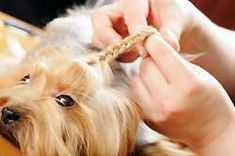 Groom your best friend year round and you'll have one smart looking dog, but also a happy and healthy pet! It is essential to take care of your dog and keep it fit and healthy all year round. A