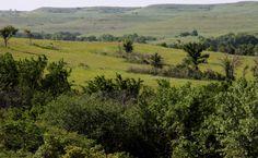 Konza Prairie (Manhattan) in the heart of the Flint Hills,  Kansas