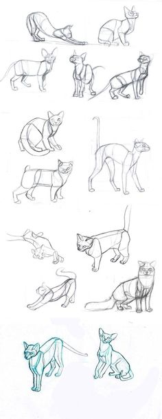 34 New Ideas Drawing Tutorial Cat Sketch Drawing Techniques, Drawing Tips, Drawing Sketches, Cat Drawing Tutorial, Sketching, Drawing Body Poses, Good Drawing Ideas, Animation Sketches, Learn Drawing