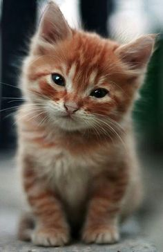 Kaatt Look At Your Phone Oh And A Super Cute Kitty (=^.^=) Thanks, Pinterest Pinners, for stopping by, viewing, re-pinning, following my boards. Have a beautiful day! ^..^ and Feel free to share on Pinterest ^..^ #catsandme #cats