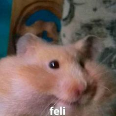 Hamsters, Funny Reaction Pictures, Funny Pictures, Cute Little Kittens, Roblox Memes, Pets 3, Spanish Memes, Cute Memes, Wholesome Memes