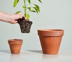 Desde 1984 a Nutriplan vem promovendo o desenvolvimento não só do mercado de plantas, mas sobretudo de ideais, pessoas e valores.