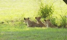 Wildlife, In This Moment, Game, Animals, Animales, Venison, Animaux, Games, Animal