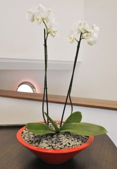 Simple but effective office plant display on a reception desk to greet visitors on arrival