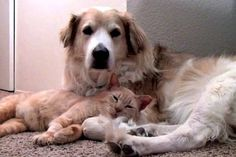 WATCH: Rescue Cat Snuggles With Dog