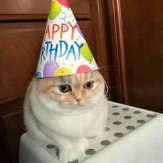 Things that make you go AWW! A place for really cute pictures and videos! Funny Animal Memes, Cat Memes, Funny Cats, Funny Animals, Cute Animals, Funny Memes, Happy Birthday Cousin, Funny Happy Birthday Meme, Cat Birthday