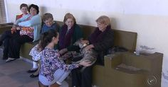 Projeto leva cães para visitarem idosos em asilo de Marília