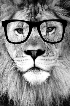 Hippest Lion with glasses - Black and white photograph Art Print