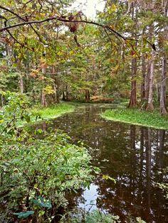 Mandeville, Louisiana Nature Center By Suzette Simoneaux