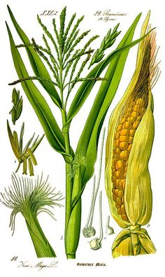 Corn hides in so many of our foods. These are some ingredients you may not have known are made from corn.