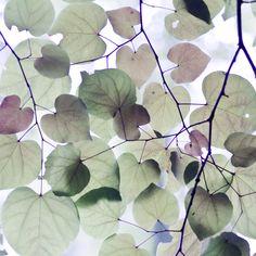 fall and spring | Flickr - Photo Sharing!