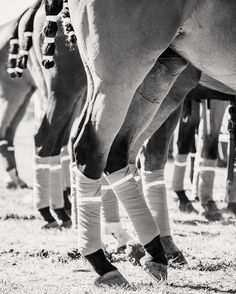 At The Lines #toowoombaphotographer #horseart #equineart #equinephotographer #polo #magicmillionspolo #polo