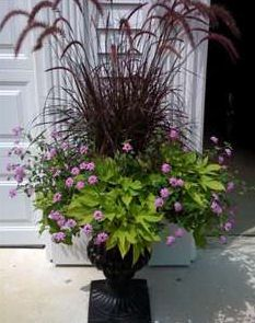 Container Gardening Design w/ grass Fountain grass for the center, trailing verbena and potato vine. Purple lantana would work too.