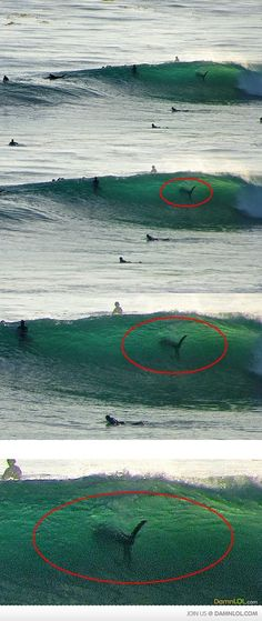 sharkS, WHY I DONT GO IN THE WATER
